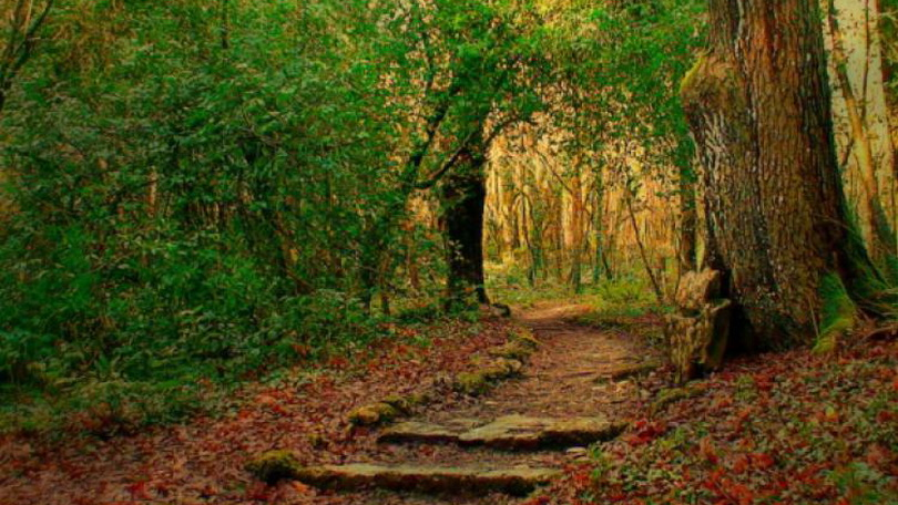 Curraghchase Forest Park 810 x 456