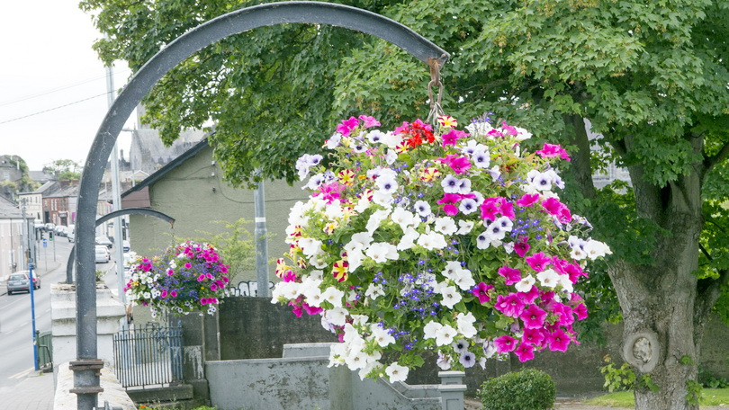 Limerick in Bloom