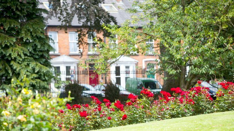 Is your pride and joy the Best Front Garden in Limerick ...