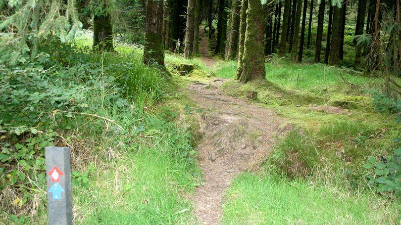 Darragh Loop Walk