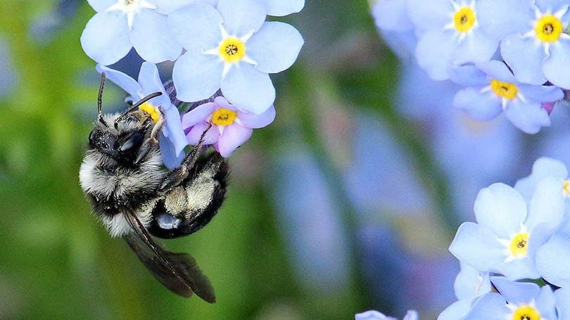 Ireland's Buzzing: International Conference on Pollinator Conservation