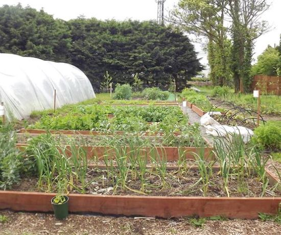Abbeyfeale parish community garden
