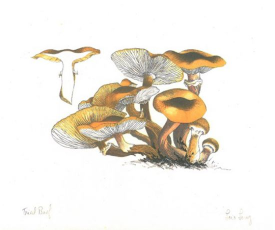 Mushroom Book - detail of lithograph print by Lois Long